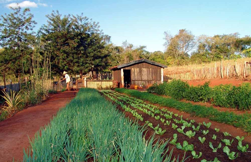Huerto rural